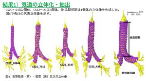 気管軟骨の形成