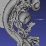 3DスキャンしたCS12胚子モデル